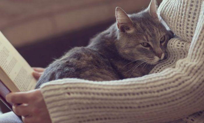 Темно-серая кошка