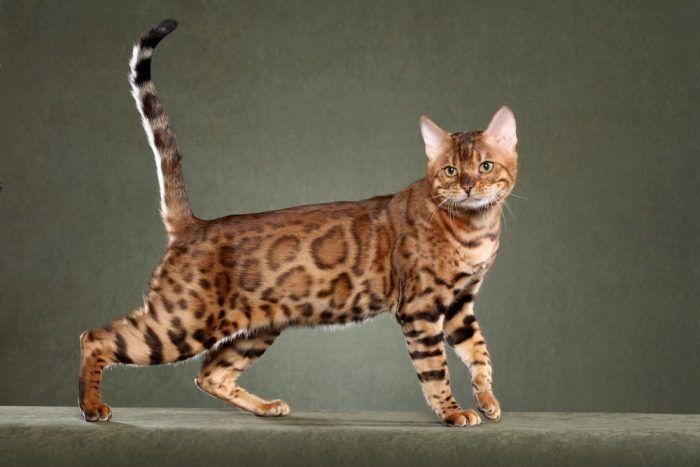 Молодой кот