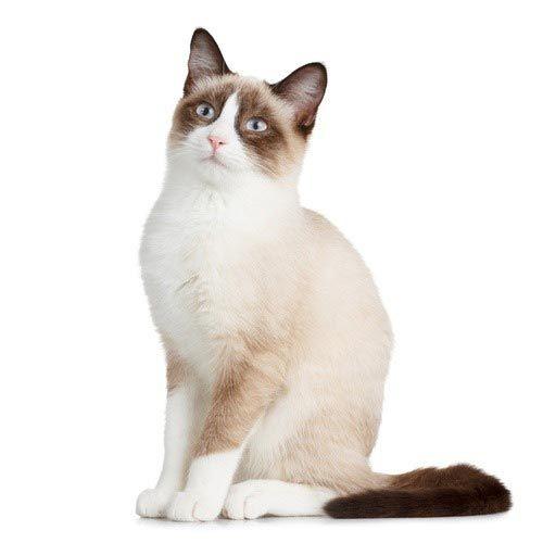 Кот на белом фоне