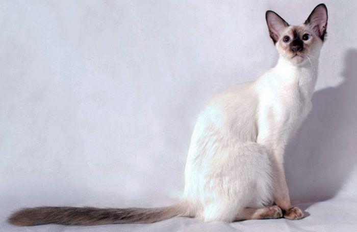 Кошка в полный рост