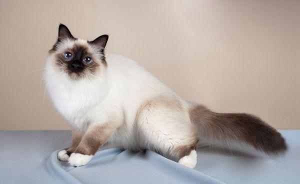 Кошка на покрывале