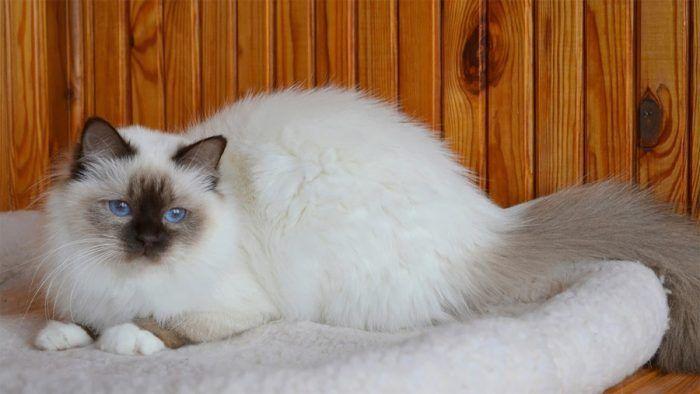 Кот на фоне дерева