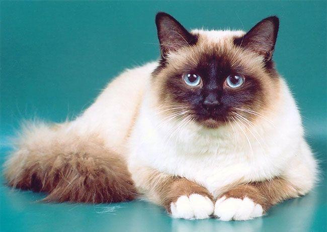 Красивый кот на зеленом фоне