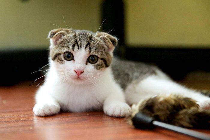 Котенок с ушками
