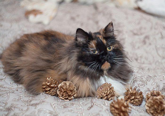 Кот на постели