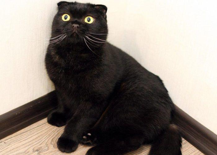 Черная кошка в углу