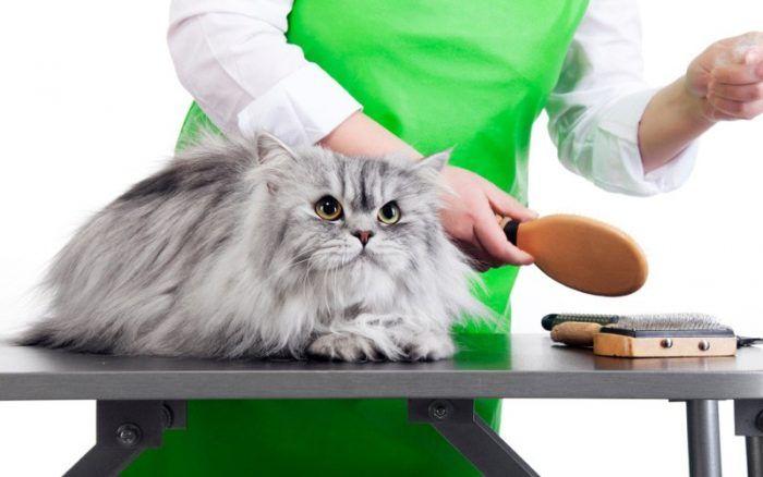 Кошка пушистая