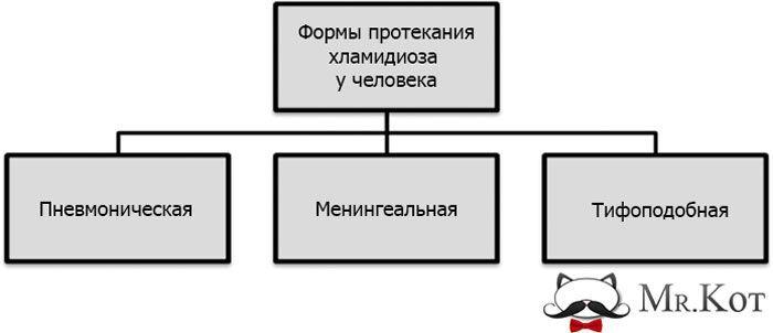 Три формы протекания хламидиоза у человека
