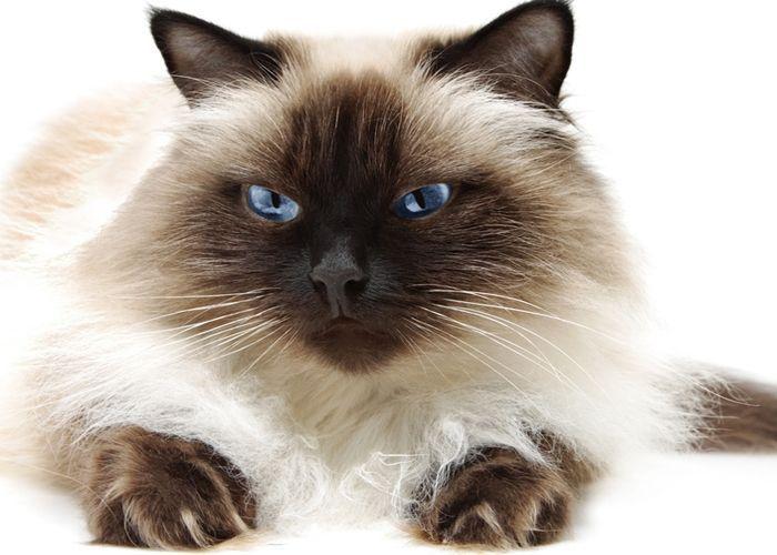 Довольный черно-белый кот