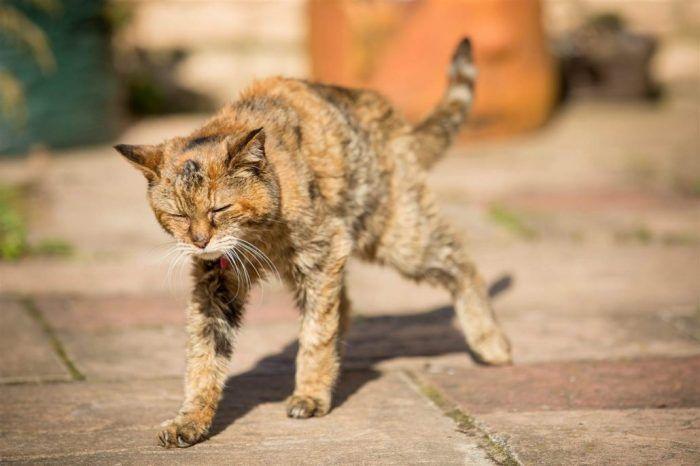 Старый кот
