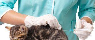 Ветеринар делает укол