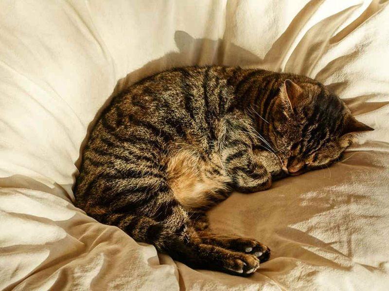 Животное много спит