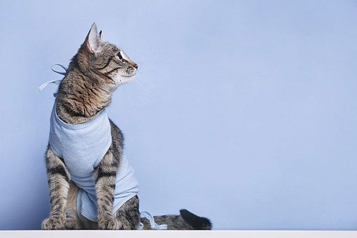 Кошка послестерилизации