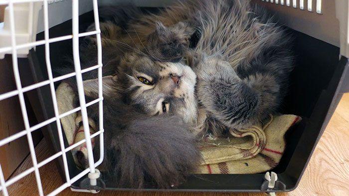 Кошка в периноске