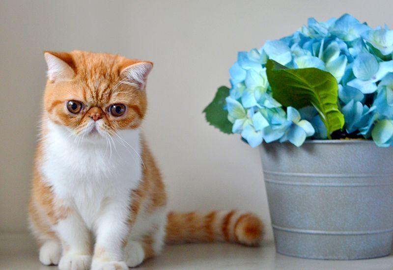 Котенок 3 месяца