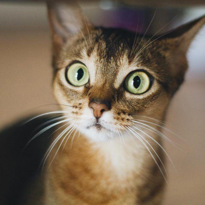Кот попробовал валерианку