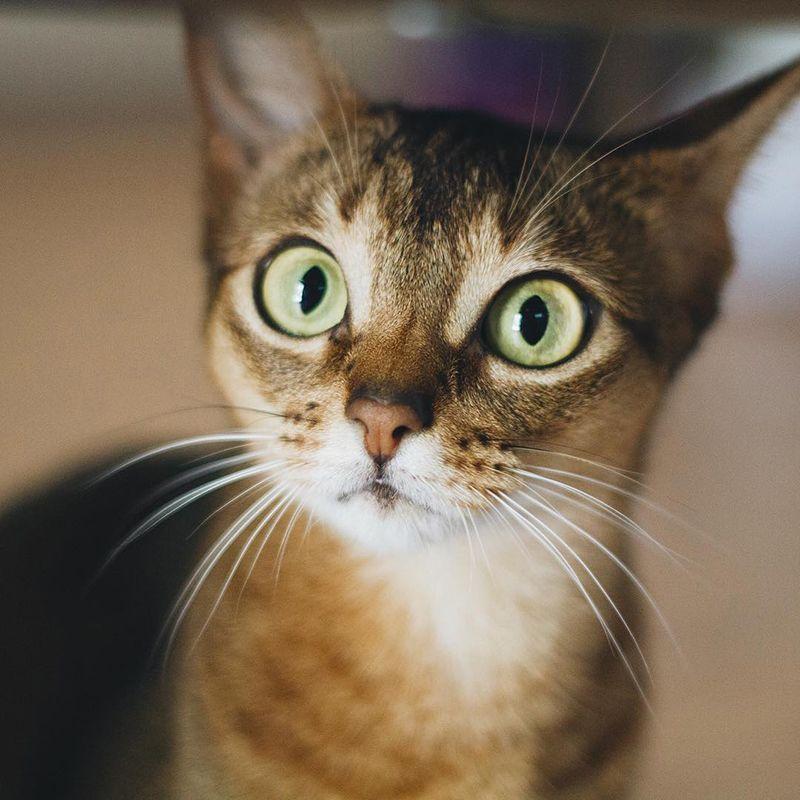 Удивленный кот прикольная картинка, открытки