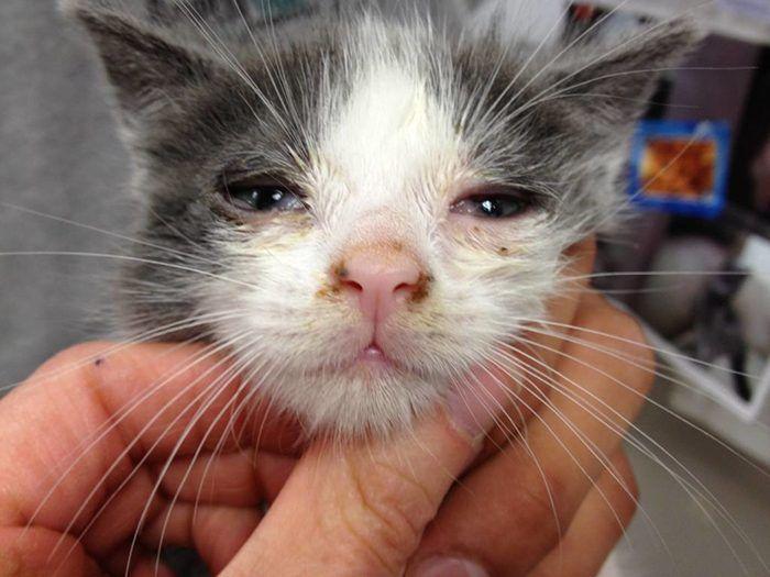 Заболевание у котенка