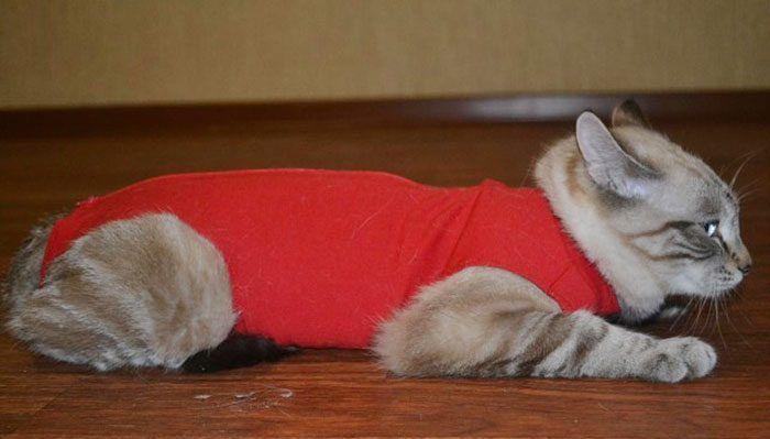 Котенок в красной попоне