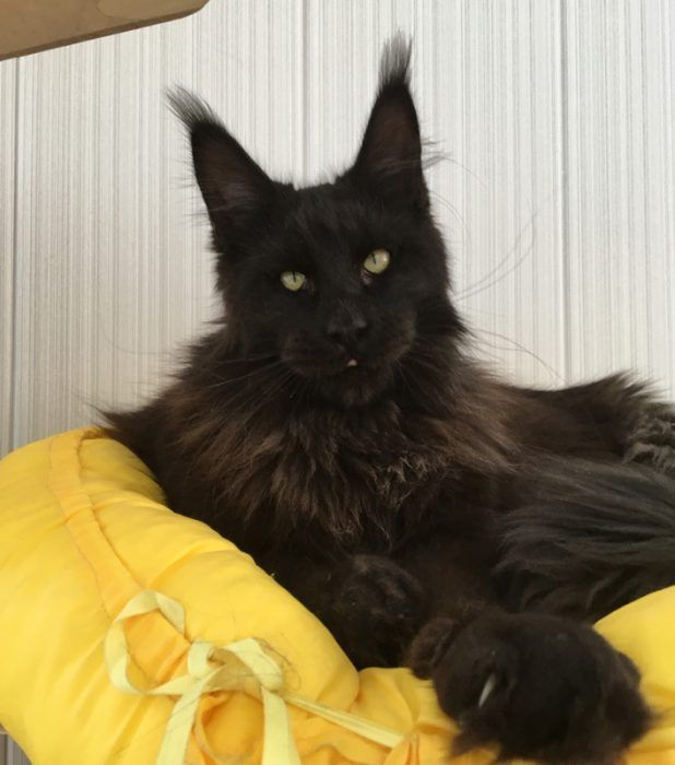 Черный как смоль котик