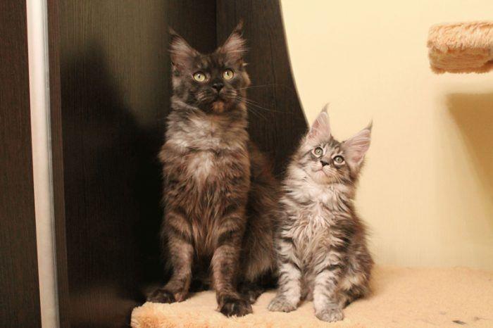 Кот и котенок