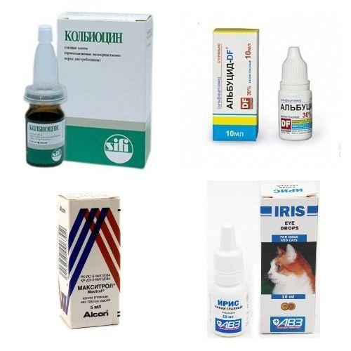 Лекарства для кошки при конъюнктивите