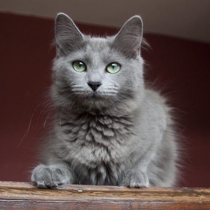 Зелено-голубые глаза
