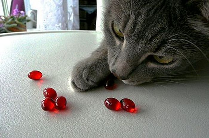 Гепатоз у кошек обзор заболевания