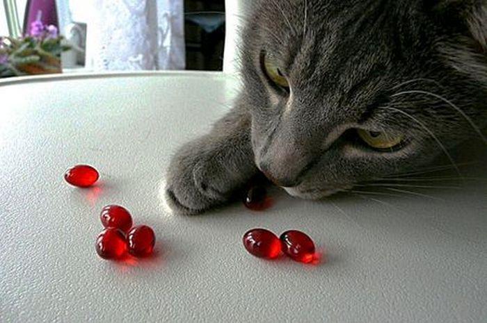 Питание кошки при болезни печени