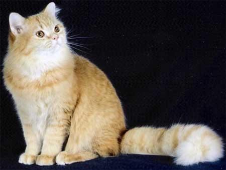 Заинтересованный котик
