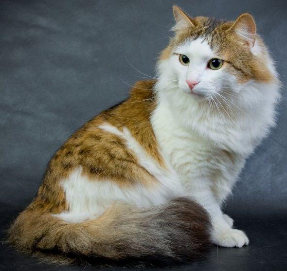 Еще одно фото котика