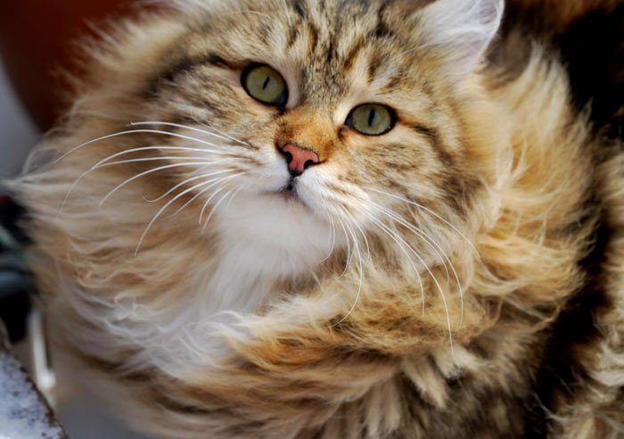 Кот в ветер