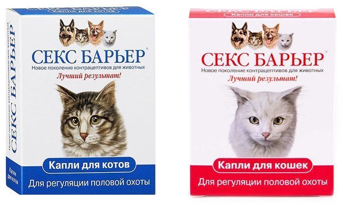 Использование кошек в сексе