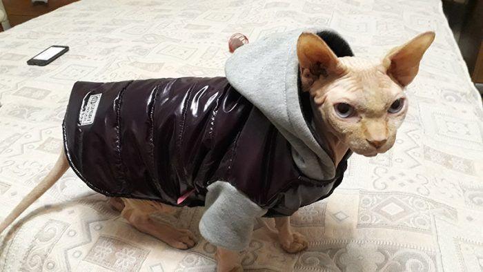 Котик в куртке