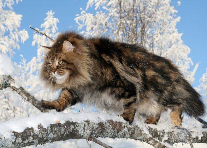 Сибирская на охоте