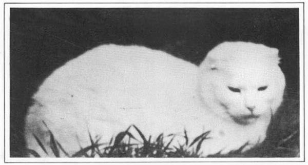 Кошка Сьюзи
