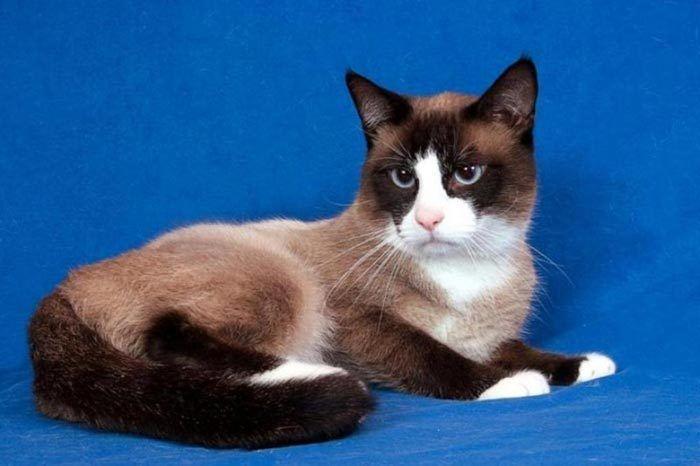 Котик на синем фоне