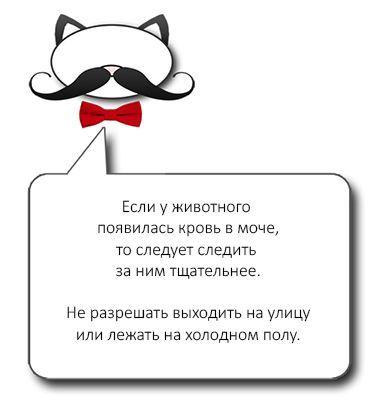 Симптомы и поведение хозяина