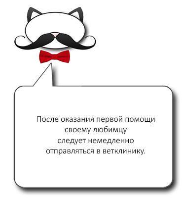 Совет о кровотечении из носа