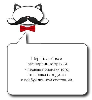 Признаки агрессии у кота