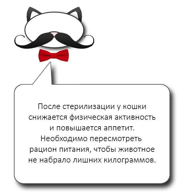 Совет по питанию кошки после стерилизации