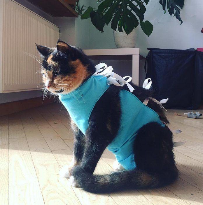 Кошка в специальной попонке