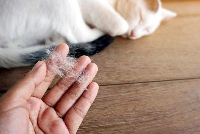 Клок кошачьей шерсти в руках