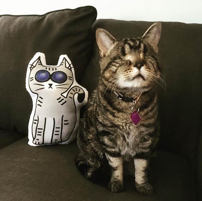 Кошка лишилась глаз