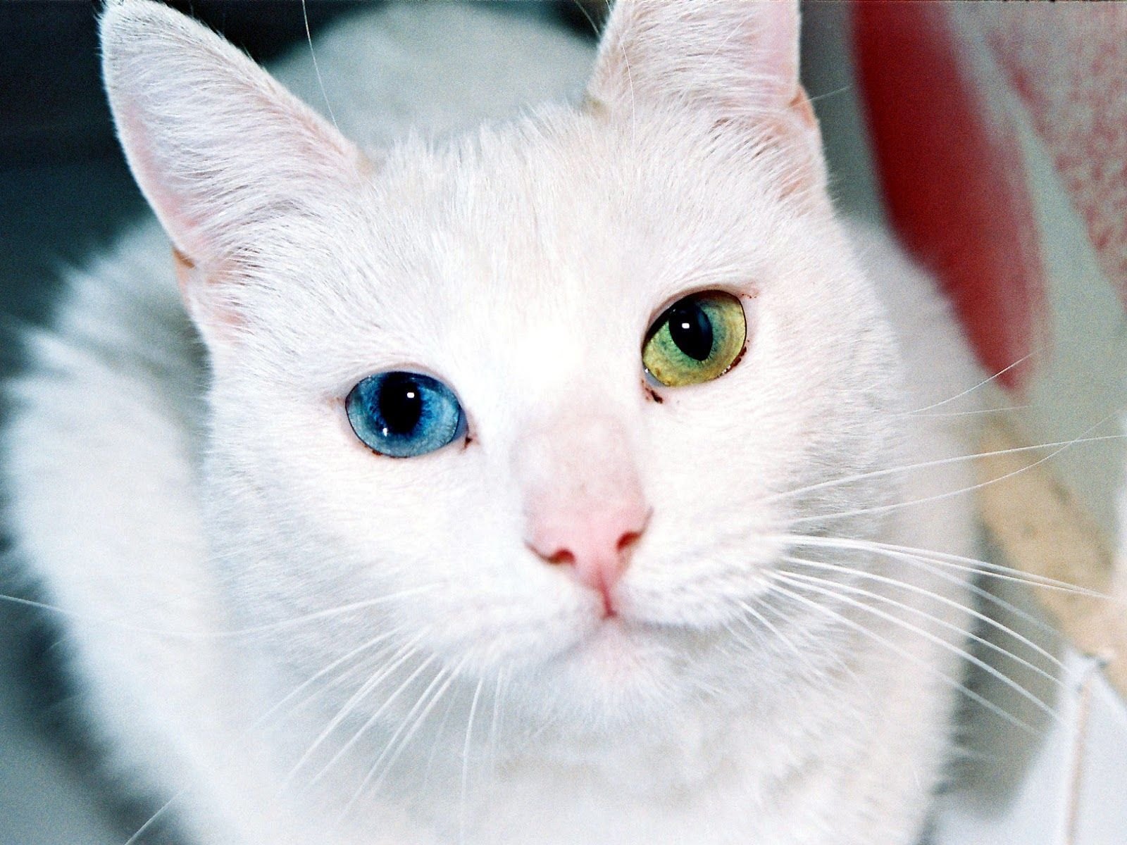 Приметы про кошек, поверья, суеверия: все известные сегодня || Если кошка нагадила на кровать что за примета