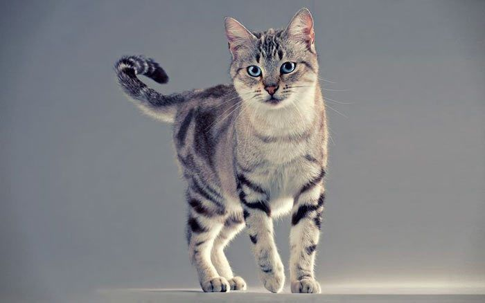 Кот позирует для камеры