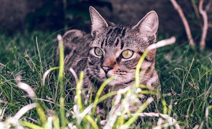 Кот в высокой траве