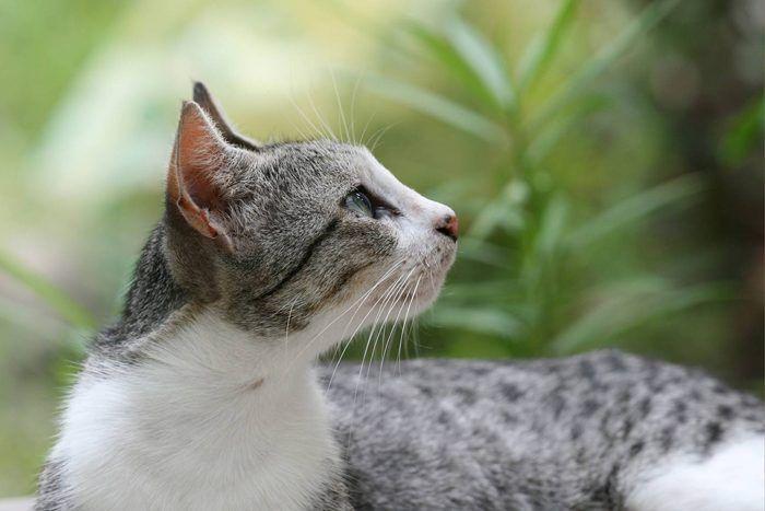 Кошка смотрит в сторону
