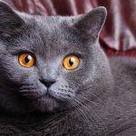 Оранжевые глаза