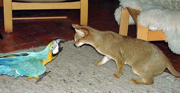 Чаузи и попугай